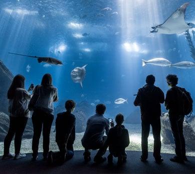 Aquarium Lisbon